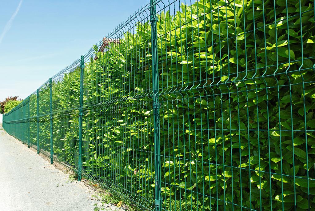 kolor-ogrodzenia